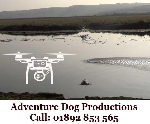 Adventure-Dog1tr